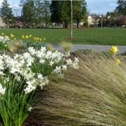 Bulb-Planting